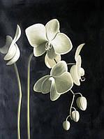 """Набор алмазной вышивки (мозаики) """"Цвет орхидеи"""""""