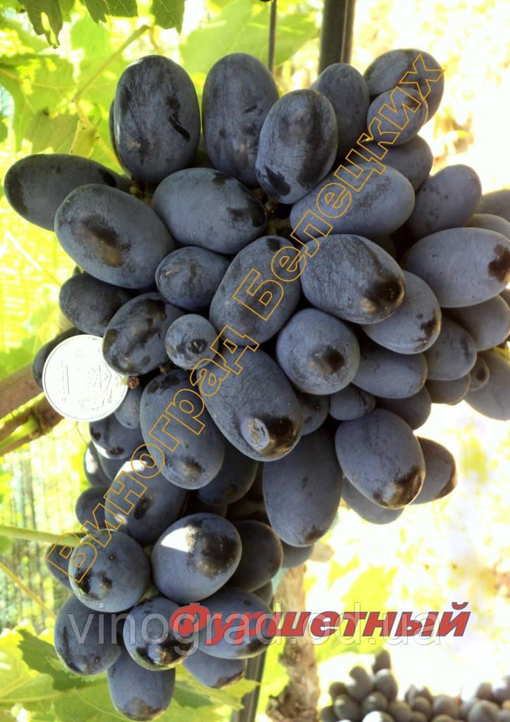 Саджанці винограду раннього терміну дозрівання сорти Фуршетний