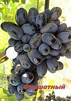 Саженцы винограда раннего срока созревания сорта Фуршетный