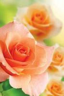 Подарочный пакет Мини 9х12х3,5  Нежная роза