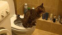 Туалет для котов , фото 1