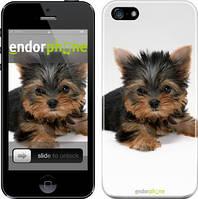 "Чехол на iPhone 5 Щенок йоркширского терьера ""931c-18"""