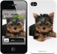 "Чехол на iPhone 4 Щенок йоркширского терьера ""931c-15"""