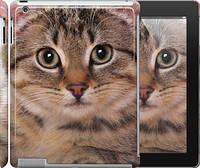 """Чехол на iPad 2/3/4 Полосатый котик """"2978c-25"""""""