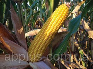 Семена кукурузы  Mas 34.В