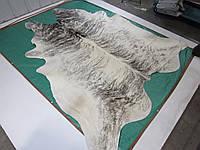 Гигантская светло серая тигровая шкура буйвола 3 метра! 7 кв.м.!, фото 1