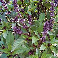 Базилик зеленый семена сорта Анисовый аромат однолетнего растения  для приготовления блюд