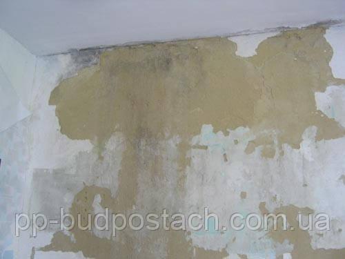 Сирі стіни і грибок