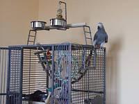 KING'S CAGES - Вольер для попугая (темный)