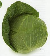 Капуста средняя Такома F1 2500 семян(калибр)