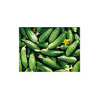 Эстафета F1 семена огурца пчелоопыляемого (Элитный ряд) 10 шт.