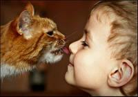 Кішки продовжують життя господарям.