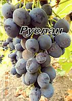 Саженцы винограда раннего срока созревания сорта Руслан