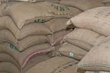 """ОПТ Зеленый Кофе  Робуста """"Черри"""" Индия. Зерновой кофе ОПТОМ - от 60 кг. xcoffee, фото 3"""