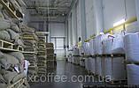 """ОПТ Зеленый Кофе  Робуста """"Черри"""" Индия. Зерновой кофе ОПТОМ - от 60 кг. xcoffee, фото 4"""