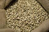"""ОПТ Зеленый Кофе Робуста """"Vietnam"""" Вьетнам. Зерновой кофе ОПТОМ - от 60 кг. xcoffee, фото 2"""