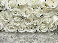 "Фотообои ""A La Rose"" 254х368 8-314"