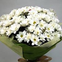Букет из белых хризантем 11 шт.