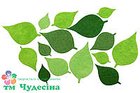 Весенние листья берёзы