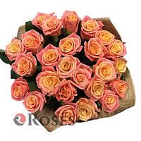 Мисс Пигги 33 персиковы розы