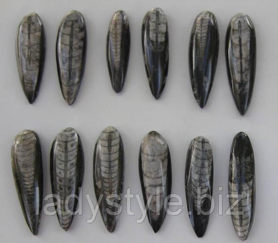 Ортоцерас  - морской реликт