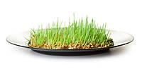 Чудодійна властивість пророщеного зерна...