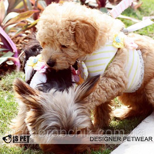 """Мягкая шлейка - поводок """"Бэби"""" Is Pet. Одежда для собак, кошек"""