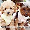 """Мягкая шлейка - поводок """"Бэби"""" Is Pet. Одежда для собак, кошек, фото 3"""