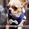 """Платье-поводок """"Западная блуза"""" для собаки Is Pet. Мягкая шлейка - поводок. Одежда для собак, кошек, фото 2"""