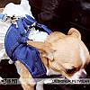 """Платье-поводок """"Западная блуза"""" для собаки Is Pet. Мягкая шлейка - поводок. Одежда для собак, кошек, фото 3"""