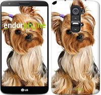 """Чехол на LG G2 Йоркширский терьер с хвостиком """"930c-37"""""""