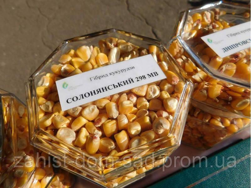 Гибрид кукурузы Солонянський 298 СВ 25 кг, фото 1