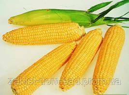 Кукуруза сахарная Брусница 40 кг мешок