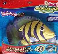 Водоплавающая рыбка батар. на планш. 32*29см(3309А)