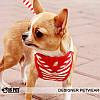 """Мягкая шлейка - поводок """"Морская"""" Is Pet. Одежда для собак, кошек, фото 4"""