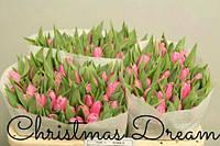 Тюльпан розовый Cristmas Dream