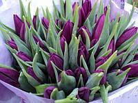 Тюльпан Фиолетовый принц