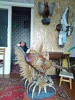 Изготовление чучел птиц, животных. Отбеливание черепов на медальон. 098-626-27-64 - Дмитрий