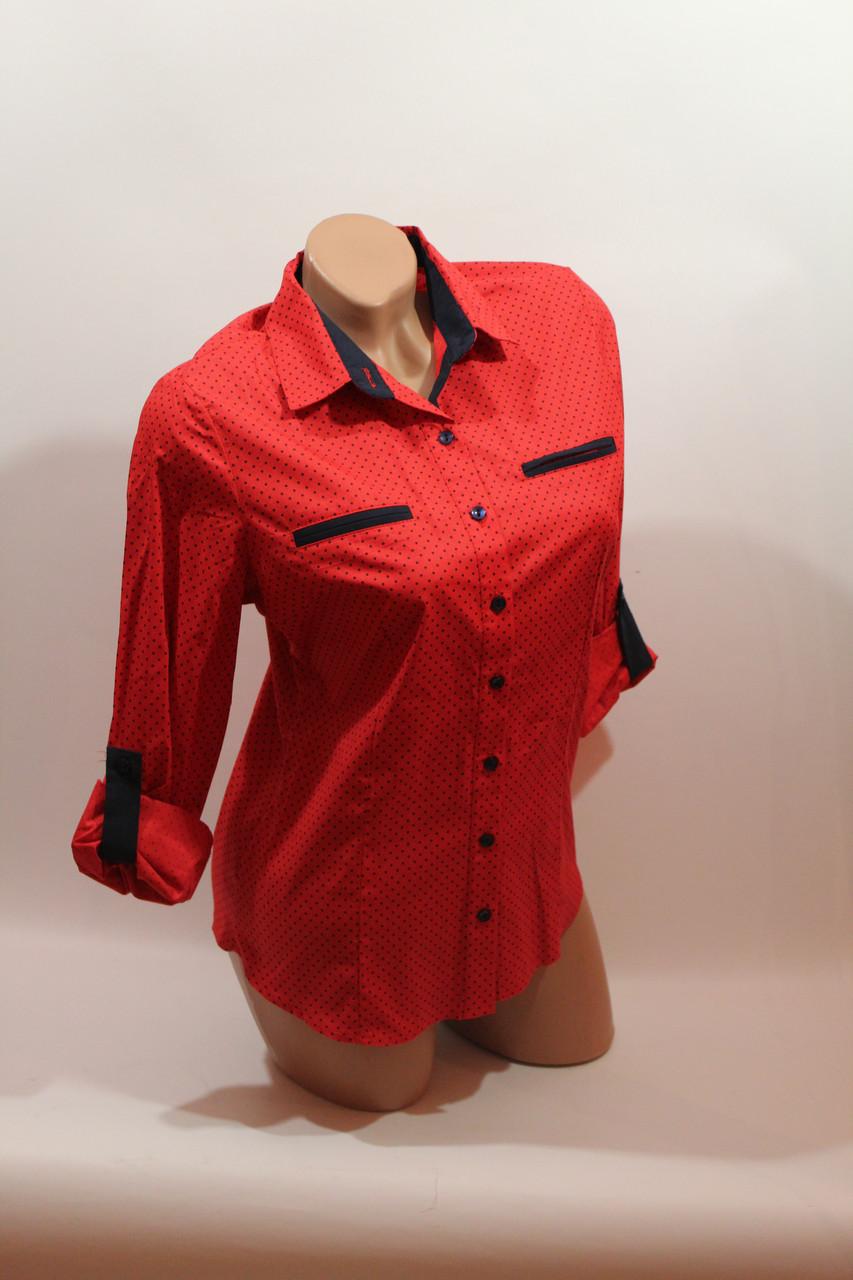 Женские однотонные рубашки (хлопок+ликра) Mod-da 4930 горошек красный ср.