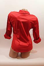 Женские однотонные рубашки (хлопок+ликра) Mod-da 4930 горошек красный ср., фото 3