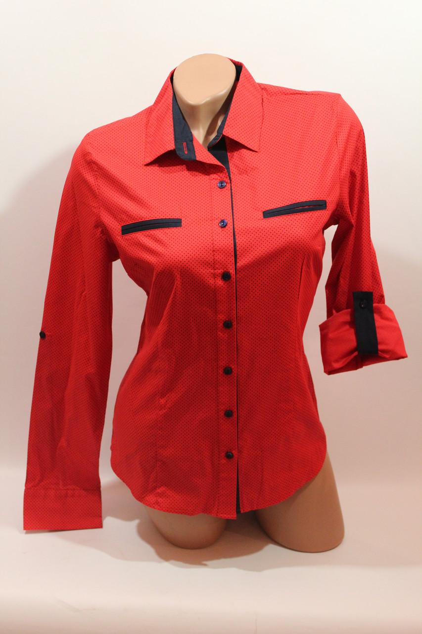 a07d19585a45 Женские однотонные рубашки (хлопок+ликра) Mod-da 4930 горошек красный мелкий