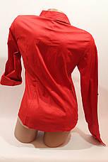Женские однотонные рубашки (хлопок+ликра) Mod-da 4930 горошек красный мелкий, фото 3