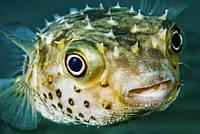 Рада собралась променять рыбу на биоресурсы