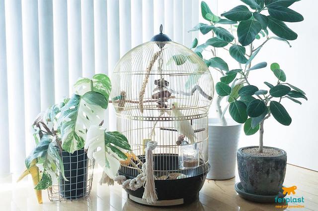 Клетки Ferplast для попугаев и домашних птиц