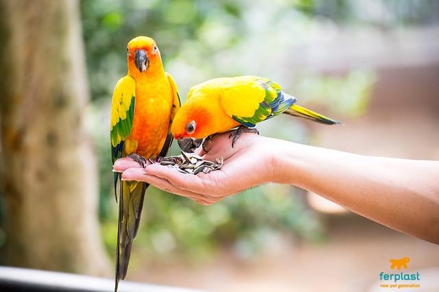 Зоотовары Ferplast для попугаев и домашних птиц