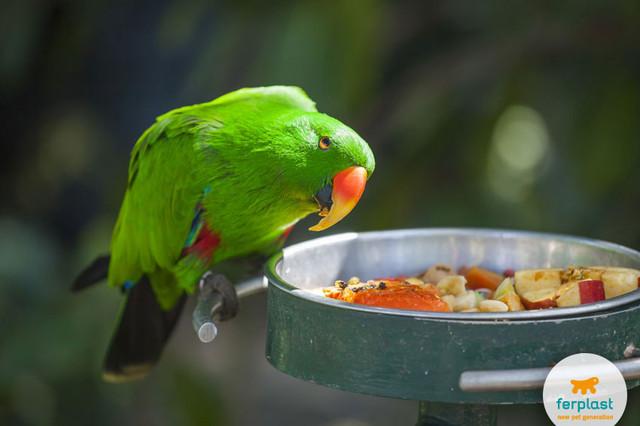Насесты Ferplast для попугаев и птиц