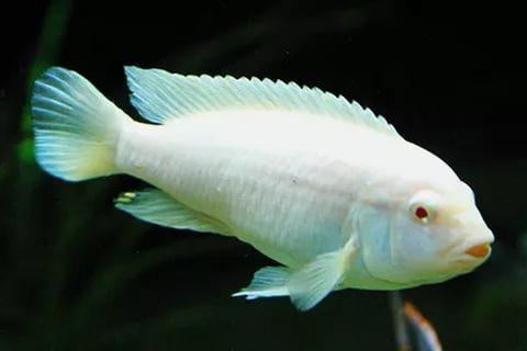"""Ароматизатор-спрей для рыбалки (50 мл) """"Белая рыба"""""""