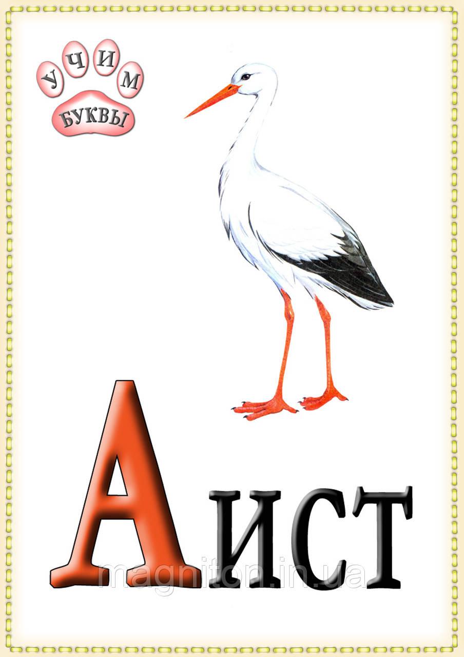 Магниты Алфавит. Русская (ІІ) А