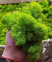 Стабилизированный мох Ягель для декора 5кг.(Норвегия)