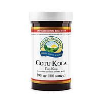Гoту Кола, Gotu Kola  - улучшает микроциркуляцию и мозговое кровообращение,повышает память и скорость реакции